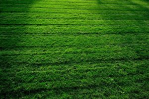 Keep your lawn looking its best!