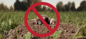 Mole Prevention and Eradication