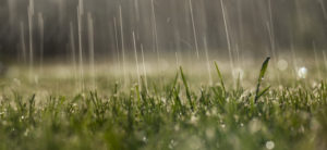 Heavy Spring Rains and Lawn Maintenance