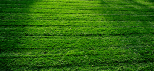 Noticing Crabgrass? Here's What To Do About It