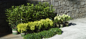 Done in a Weekend: Landscaping That Speaks to You