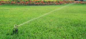 watering my lawn