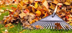 Why You Should Rake and Bag or Mulch Your Leaves in the Fall