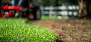 Plan Now to Get the Lawn and Landscape You Want Next Spring