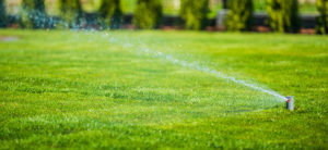Lawn Care: How Much and How Often Should You Water Your Lawn?