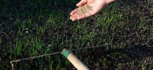 How to Top Dress and Reseed Your Lawn